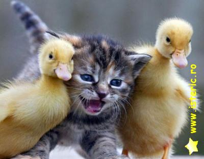 abaa-cat-and-birds.jpg