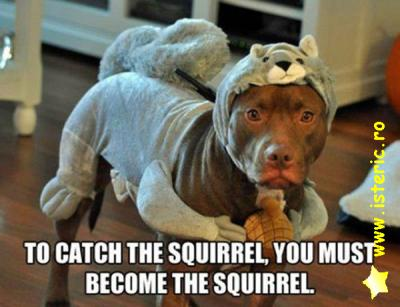 to-catch-the-squirrel.jpg