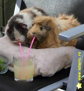 abaa-two-hamsters-drinking-fro.jpg