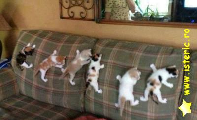 abaa-kittens-on-the-couch.jpg
