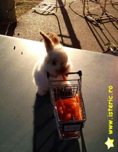 abaa-bunny-shopping.jpg